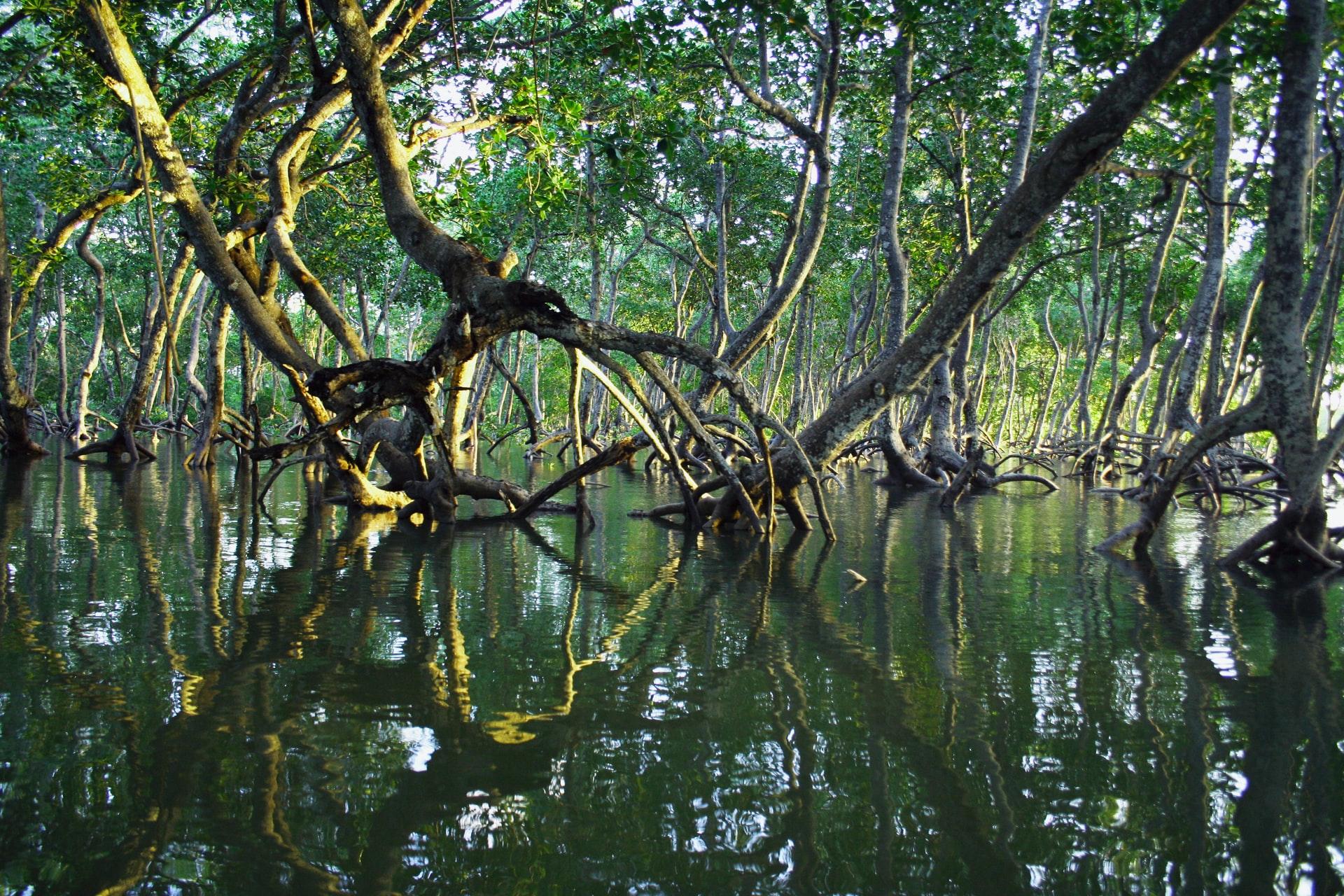 Mida Creek, Kenya